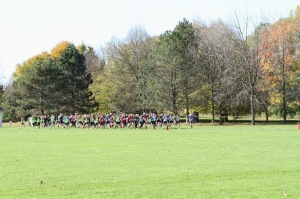 Start of Sunnybrook 8K XC Race November 3, 2013